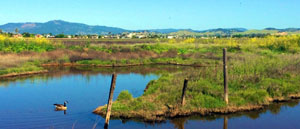 Suisun Fairfield