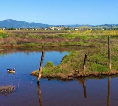 Explore the Suisun Marsh