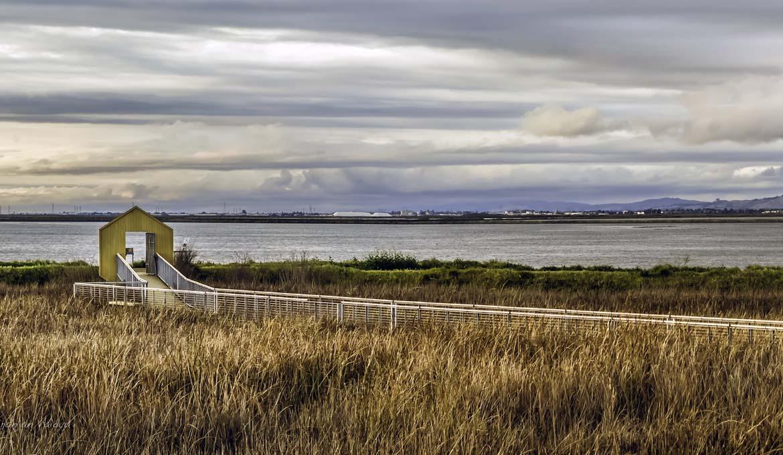 Aliviso_Wetlands